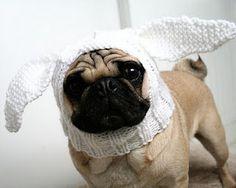 Pug wearing crocheted white bunny ears