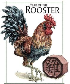 In spite of being born in the year of the rooster I'm not a big fan of the animal itself.