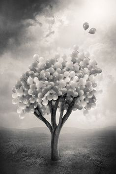 balloon tree; more correctly, latex tree. In the spring the blossoms are bubbles formed from the sap of the tree. They break free once the seeds are ready to be transported to a new location, thus spreading the tree naturally.