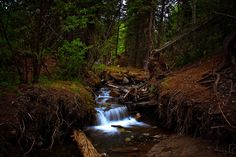 Magic in the woods by JoLoLog, via Flickr