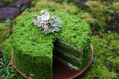 Sand or Sugar: Nettle Moss Cake (wild love)