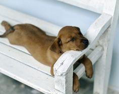 puppy takes a nap