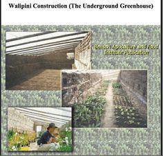 Instructions from the Benson Institute on the underground green house (Walipini). Super cool idea, I really like it especially to help grow crops all year round! Enjoy! #green #greenhouse #gardening