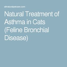 Natural Treatment of Asthma in Cats (Feline Bronchial Disease)