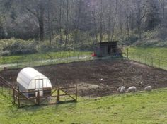 raising pigs with hoophouse shelter in winter = greenhouse and garden in summer