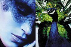 Birds give flight to our imaginations, via Li Edelkoort @ TrendTablet autumn/winter Bad Picture, Bird Skull, Birds 2, Autumn Inspiration, Art Direction, Peacock, Cool Pictures, Sculptures, Illustration Art