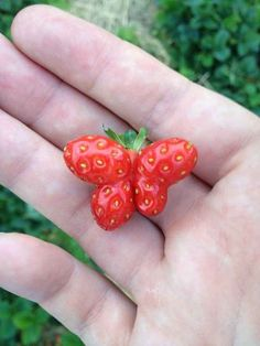 This strawberry wanted to be a butterfly instead. | 28 Plants That Completely Forgot How To Plant