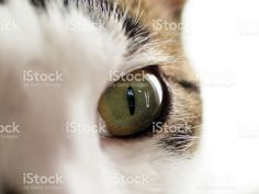 Cat, Eye, Close Up