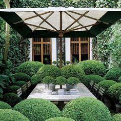 Stylish Topiary in the backyard