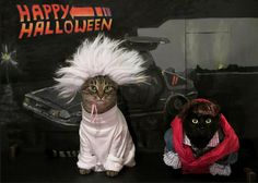 Back to the Future: Cat edition