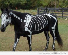 skeleton hors