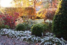 Autumn in my garden. Lindas trädgårdsblogg