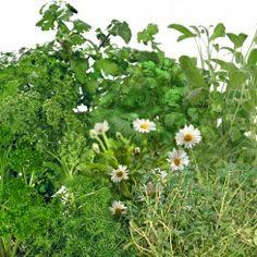 Traditional Medicinal Herbs Seed Pod Kit (7-Pod)