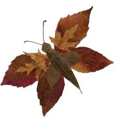 Feather Crafts For Kids – feather crafts Autumn Leaves Craft, Autumn Crafts, Fall Crafts For Kids, Autumn Art, Nature Crafts, Leaf Crafts, Feather Crafts, Flower Crafts, Arte Naturalista