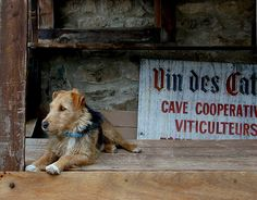 The guardian of the wine caves in the city of Minerve