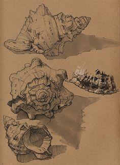 花瓣网-der Peet : Insects by Floris van der Peet on ArtStation. Animal Sketches, Animal Drawings, Art Sketches, Art Drawings, Shell Drawing, Gcse Art Sketchbook, Observational Drawing, A Level Art, Sketchbook Inspiration