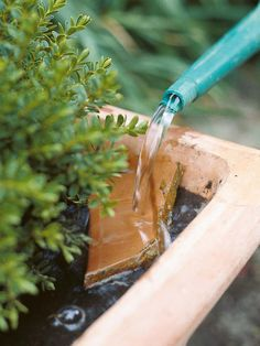 How to Water - The best way to water is with a watering can with a fine spray, which distributes water evenly and so won't compact the soil. If you don't have such a can, place a piece of slate or old crock in to the corner of a pot, tilted downward, and gently pour water onto it. This method also prevents soil compaction and gives an even distribution of water. Repeat in each corner.