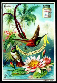 1897.  Exotic Birds and Flowers (No. 5) trading card issued by Liebig Extract of Beef Company. S540.