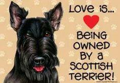Love my Scottie