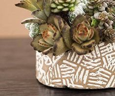 to Water Succulent Plants Arrangement created by Cindy of The Succulent Perch - Pottery by Susan Aach - Photography by Cassidy TuttleArrangement created by Cindy of The Succulent Perch - Pottery by Susan Aach - Photography by Cassidy Tuttle Succulent Gardening, Succulent Pots, Planting Succulents, Planting Flowers, Watering Succulents, Indoor Gardening, Gardening Tips, Air Plants, Cactus Plants