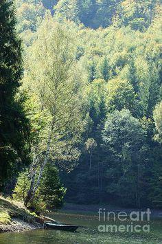 Valea de Pesti Lake 01 by Dan Marinescu Wild Forest, Image Please, American Artists, Photo Art, Cool Art, River, Nature, Dan, Photography