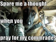 Military dogs are heroes too