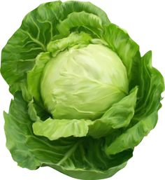 This high quality free PNG image without any background is about cabbage, plant, vegetables and green. Fruit And Veg, Fruits And Vegetables, Fresh Fruit, Funny Vegetables, Cabbage Vegetable, Corn Beef And Cabbage, Cabbage Roll, Cabbage Health Benefits, Hunters Stew