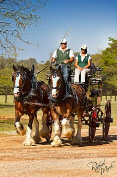 Life is best when you have someone to walk next to you. <3 Clydesdale horses in harness