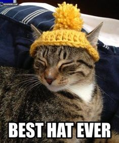tabby cat wearing a yellow knitted hat. it has a pompom on it. I'm dying