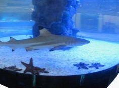 Shark Tank, Fish Tank, Aquarium Sharks, Tanked Aquariums, Drown, Loki, Eat, House, Animals