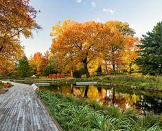 NYBG Native Plant Garden - ASLA-NY