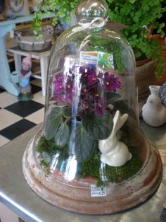 perfect for a sweet Easter / Mother's Day table centerpiece.  African Violets and a little bunny under a glass cloche / bell jar.  LOVE