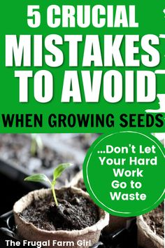 Starting seeds indoors is rewarding and helps when you have a short grow season. If you are growing seeds indoors these mistakes are sure to happen if you aren't aware of them. Make Your Own Game, Grow Your Own Food, Gardening For Beginners, Gardening Tips, Starting Seeds Indoors, Fall Vegetables, Most Common, Growing Seeds, Koh Tao