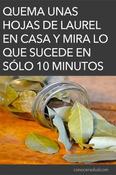 Quema unas hojas de laurel en casa y mira lo que sucede en sólo 10 minutos - Conocer Salud