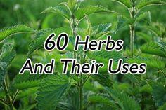 Herb encyclopedia