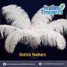 Feather Treasures – An eminent store to buy feathers online