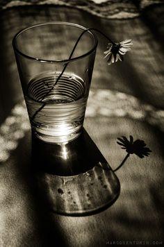 Marco Venturin Photography » Scomposizione: the dark spring » Marco Venturin Photography