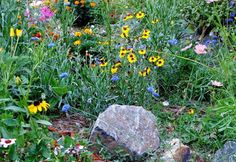 Xeriscaping: Let's Get Started | Planet Natural