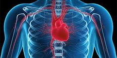 Heart attack and cardiac arrest: what's the difference? - Health & Wellbeing