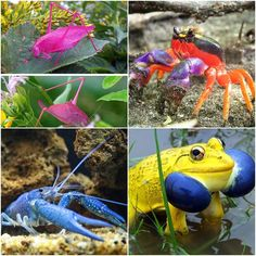 The varied nature, look at the unusually colored animals