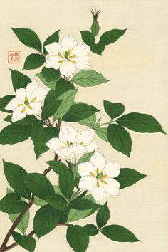 Gardenia by Kawarazaki Shodo (published by Unsodo) Botanical Drawings, Botanical Illustration, Botanical Prints, Japanese Prints, Japanese Art, Grand Art, Oriental Flowers, Japanese Flowers, Japanese Painting