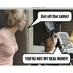 funny cats, humor, You're not my real mom Funny Cat Pictures, Funny Photos, Animal Pictures, Funniest Pictures, Funny Images, Bing Images, Jokes Photos, Pet Photos, Wall Photos