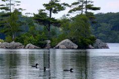 Backyard Birds, Pond, Maine, River, Outdoor, Water Pond, Outdoors, Outdoor Games, Outdoor Living