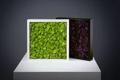 Scandia Moss Framo FA300 - JEM 1467 Tested Deodorization Wall Art.
