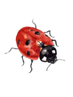 Ladybug Watercolor Painting Red Ladybird by ColorWatercolor #ladybird #watercolor #art #poster