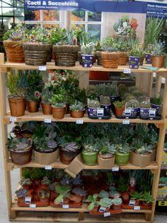 Various succulents