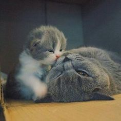 Momma cat and kittens show their love to each other.