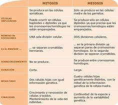 Cuadros comparativos entre Mitosis y Meiosis | Cuadro Comparativo