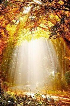 Осень - танец опавших листьев - 46 фото. Фотографии Эмилия Бибилашвили.