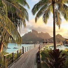 """**calls in sick and immediately books trip to Bora Bora** #TLPicks courtesy of @eahoneymoons and @josevilla"""
